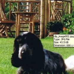 Lost dog on 18 Nov 2009 in Galway.     Hi I was hoping people that you could help me in announcing our missing dog.She is a 4 year old black cocker spaniel with a white spot on her head and answers to the name of Sally.  She is a very timid and nervous dog sadly missed by her owners & sister dogs.She was lost in the area of Loughgeorge in Claregalway last night at half past six.our names are is Caitriona& Diarmud and our phone numbers are 085-7330025/ 0879473266     Hope you can help  Caitriona