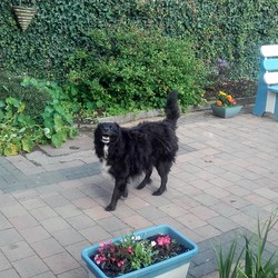 Lost dog on 18 Sep 2017 in Tallaght . found and returned to owner 