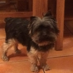 Reunited dog 18 Sep 2019 in Crumlin. 'Champ'