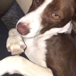 Lost dog on 19 Dec 2018 in Wexford Town. Dog lost in Wexford Town on the very early morning of 19/12