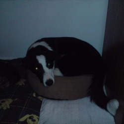 Lost dog on 19 Jan 2010 in Brize, Claremorris, Co. Mayo. Last seen outside the Beaten Path Pub in Brize, Claremorris, Co. Mayo. shes 3 yrs old and has a crooked front right paw. Generous reward offered! any information to her whereabouts would be greatly appreciated, she is missed so much!!! Contact Lisa on 083-335-3547 or 087-285-9421