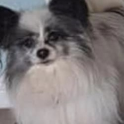 Lost dog on 19 Mar 2019 in mellowes road. lost ...FINGAL Dog Owners Group, lost mellowes road, dog is 13 years old..
