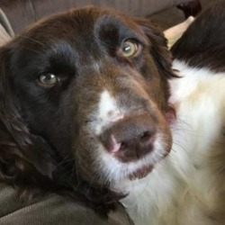 Lost dog on 19 Sep 2019 in donabate. lost......Lost & Found Pets Ireland 3 mins ·  Lost Female Dog - R126, Ballymadrough Donabate K36dy98, Dublin  Missing since Wed Sep 18th, a female dog (microchipped), under 3 years old. She is not spayed