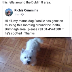 Lost dog on 20 Apr 2019 in Dublin . Small westie, went missing Dublin 8 area at 7.30am today. Has contact details on collar.