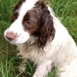 Lost dog on 20 Aug 2019 in trim_. lost...to Trim - General Discussion Board