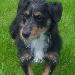 Lost dog on 20 Dec 2009 in Portlaoise.Co.Laois. Lost dog 20/12/09.Bobik,male,3 years old,breed- black&brown&white.Very friendly and playful.