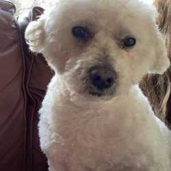 Lost dog on 20 Feb 2021 in Co. Mayo. LOST/ STOLEN 