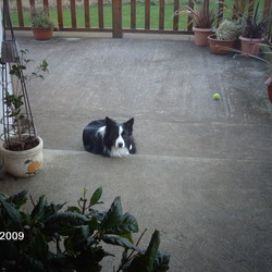 Lost dog on 20 Jan 2010 in ARDFINNAN CO.TIPPERARY. BLACK AND WHITE SHEEPDOG 4 YEARS OLD.WHITE STRIPE DOWN FACE.WHITE CHEST.TIMID FAMILY PET.MUCH MISSED.