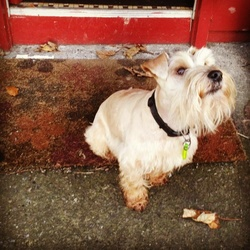 Lost dog on 21 Aug 2018 in Finglas/the ward. Lost 