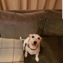 Lost dog on 21 Dec 2018 in Dartry. JUNO has been Found and is back home safe and sound.