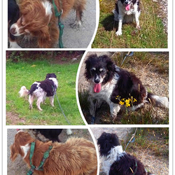 Lost dog on 21 Jul 2018 in Co Galway. Two dogs are missing from Moycullen area Co Galway since Sat Jul 21st, 2018