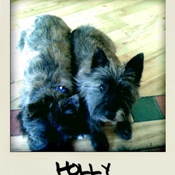 Reunited dog 22 Dec 2009 in Naas. Reunited! This is Holly, she's a 3 year old cairn terrier who is missing since 22nd December with her brother Oscar.  Both are very sadly missed.  Please contact Derek on 0872932273 if you have any information