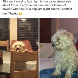Lost dog on 22 Dec 2017 in Calverstown kildare. Her name is Tilly. She is two years old. Very shy, quiet and pleasant dog.