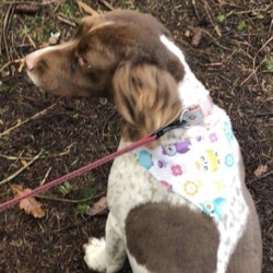 Lost dog on 22 Oct 2019 in RATHANGAN. lost....K.W.W.S.P.C.A.