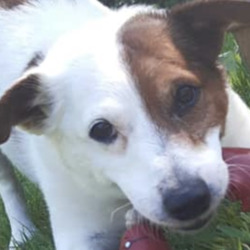 Lost dog on 23 Jun 2020 in swords. lost....Swords Veterinary HospitalLike Page