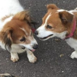 Lost dog on 23 Mar 2021 in wicklow. missing from ladysbridge wicklow  reported on wicklow dog pound