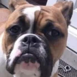 Lost dog on 23 Oct 2020 in crumlin. stolen..Portavogie community and news page