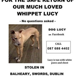 Lost dog on 24 May 2019 in swords. stolen...https://www.facebook.com/126681107378374/photos/a.134889249890893/138528436193641/?type=3&theater