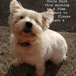 Found dog on 25 May 2020 in Gort, Galway. Dog found and returned home, thank you everyone for your help x