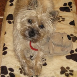 Reunited dog 26 Feb 2010 in Thornhill Road, Old Connaught, Bray. JUNO - went on holiday* but is now back with her lucky family!