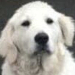 Lost dog on 26 Feb 2021 in portarlington. lost...Kildare Animal Foundation tuSfpo6nmsoredf  ·  Bailey is missing from Portarlington.  Last seen on Sweep Road on Friday, 19th Feb between 2pm and 4pm. She's wearing a pink collar. Please call 087 7584473 if you see her. Please share.