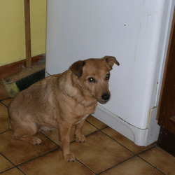 Lost dog on 26 Mar 2010 in South Dublin. Beloved family pet lost on 26/03/10 in Rathgar. She is 14 years old and is deaf. She is a cross between a jack russel and a fox terrier. She is rusty brown in colour with a small white strip on her front. She is very affectionate and is greatly missed.