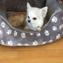 Lost dog on 26 Nov 2018 in Dublin . UPDATE Suki has been located - RIP. Chihuahua (Suki)No collar or chip. Beloved family pet for 15+ years.