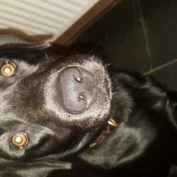 Reunited dog 27 Dec 2018 in Castlepollard/Finea area,co.westmeath. *FOUND SAFE AND WELL*