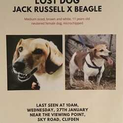 Lost dog on 27 Jan 2021 in Near SkyRoad Clifden, County Galway. HAVE YOU SEEN BELLE?