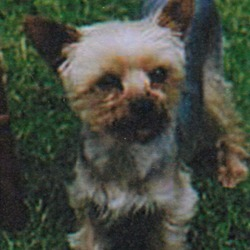 Reunited dog 28 Sep 2009 in Dublin 4. Found safe and sound