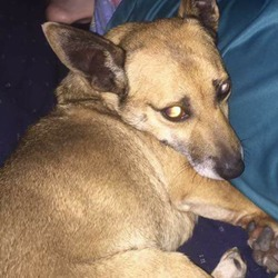 Reunited dog 29 Aug 2017 in Baltinglass Wicklow. Found safe and sound