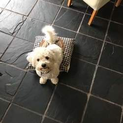 Lost dog on 29 Jul 2019 in Inniscarra, Cork. 2 Dogs Missing - Peppa, a Bichon Frise, Mini, a miniature Jack Russell.  Last seen outside our home in Moneyflugh, Inniscarra, Co.Cork on 29/07/19. Anyone with any information, please contact 0979365753. Reward offered