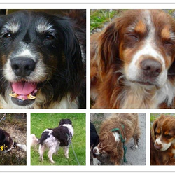 Lost dog on 29 Jun 2019 in Moycullen Co Galway. Two senior dogs have been missing from Moycullen area Co Galway since Sat July 21st, 2018.