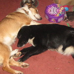 Lost Dog On 29 Mar 2011 In Cashel Tipperary