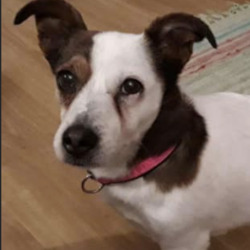 Reunited dog 30 Jan 2021 in navan. UPDATE REUNITED....lost...T.N.R West Dublin