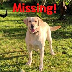 Reunited dog 30 Sep 2021 in Athlone . Our golden Lab Penny went missing on Thursday 30th September in the Kilkenny West/Glasson area of Athlone. A much loved family dog we are asking anyone who thinks they have seen her to contact us.