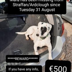 Lost dog on 31 Aug 2021 in Straffan. ************** €500 Reward *****************  Mara is still missing, €500 cash rewards for finding  Our dog Mara broke out of our garden on Tuesday 31 August in the morning (Ardclough / Straffan area). She's a really friendly 2 year old mixed breed and beloved family pet. We've been out looking for her tireless for nearly 2 weeks, but there's no sign of her.   If you bring her home safely, or drop her to a vets, Garda station or somewhere safe that she can be collected from, then there is €500 waiting for you. Please message Peter on 087 970 4140.