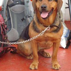 Reunited dog 31 Oct 2009 in glanmire cork. dog found on 2/11.delighted