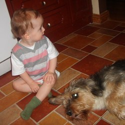Reunited dog 31 Oct 2009 in Kilkenny. LOST FAMILY MEMBER = Charlie - very friendly family dog. Age 9 - he does not have a collar on. We miss him and we are worried. YIPPEEEEEE HE CAME HOME