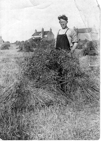 Harvest - Quoybanks