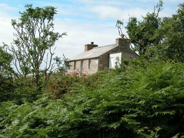 Buzzard's granny's house, Hoy