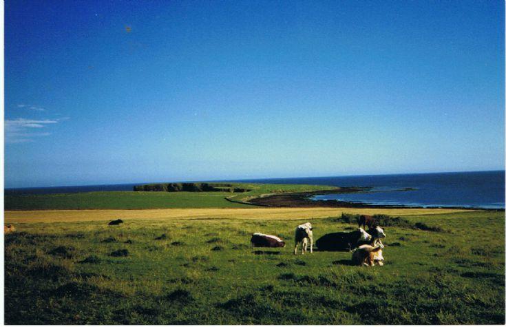 Lamb Head Stronsay