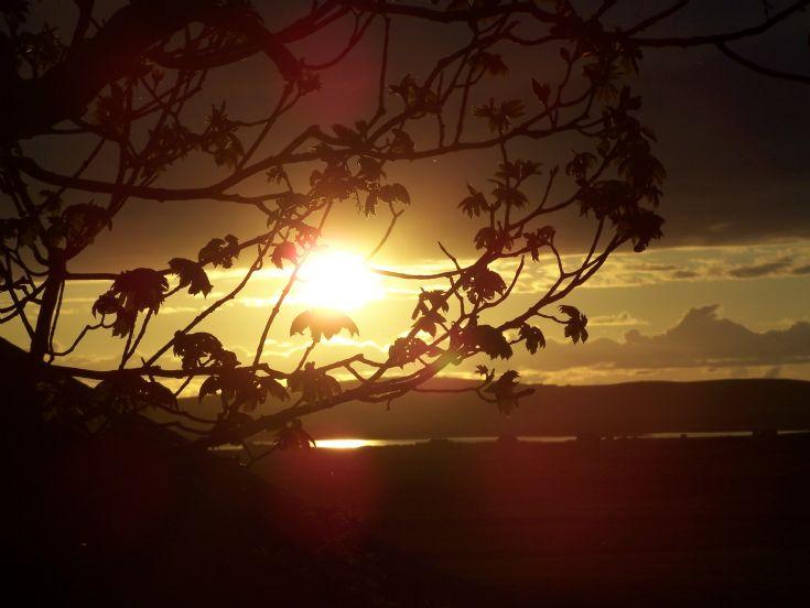Sunset over Harray Loch through a tree