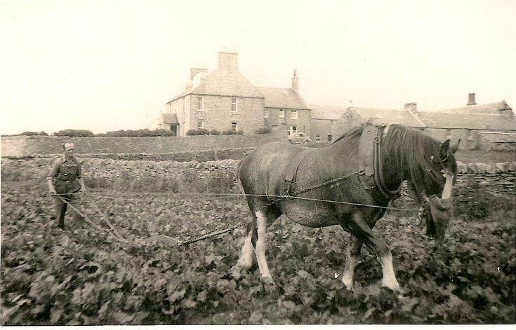 Robert Work of Holland Farm, Stronsay