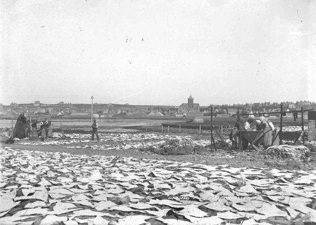 Drying fish at the Peedie Sea