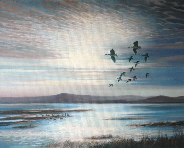 Whiffling geese, Shapinsay