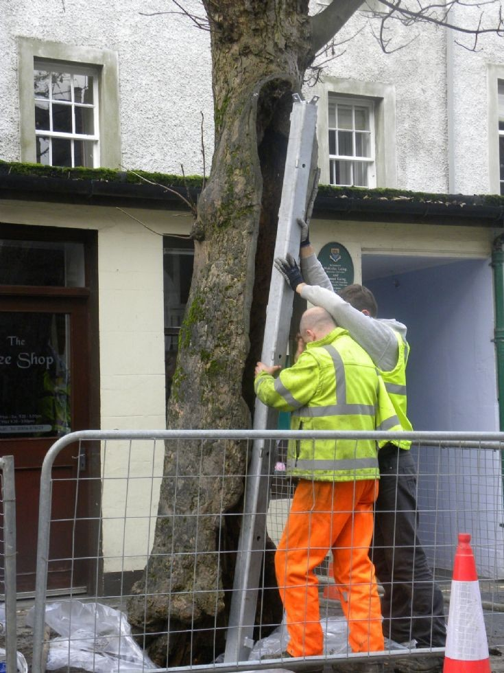 Big Tree gets some support