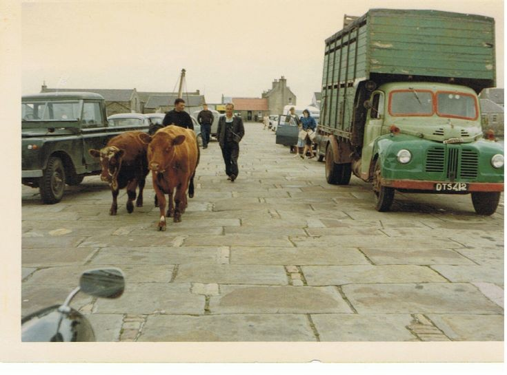 Shipping cattle Stronsay, possibly 1980