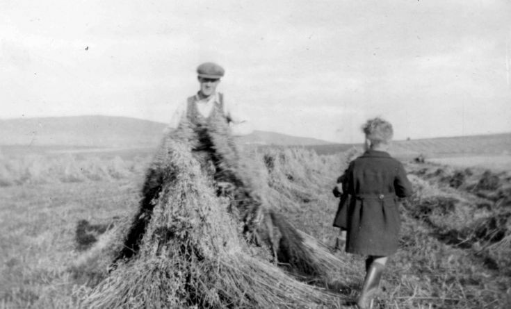 In the stooks