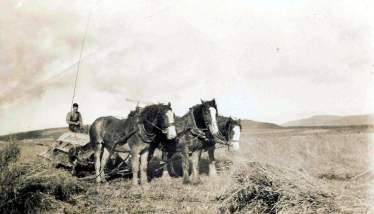 Horse-drawn binder at Midgarth